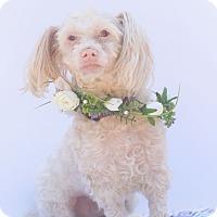 Adopt A Pet :: Barney - Loomis, CA
