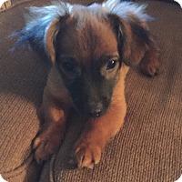 Adopt A Pet :: Derek - Groton, MA