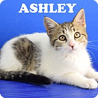 Adopt A Pet :: Ashley - Carencro, LA