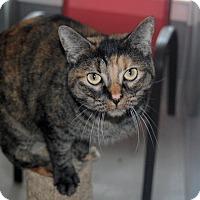 Adopt A Pet :: Sake - Kingston, WA