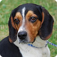 Adopt A Pet :: Jake - Coeburn, VA