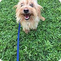 Adopt A Pet :: Willy - Lehigh, FL