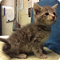 Adopt A Pet :: Dean Martin - Janesville, WI