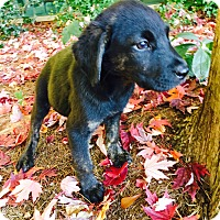 Adopt A Pet :: Willow-Nature Pup - Cumming, GA