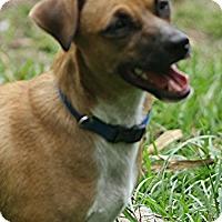 Adopt A Pet :: HENDRIX-16 Weeki Wachi, Fl - Lithia, FL