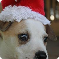 Adopt A Pet :: Skip - Tracy, CA