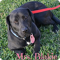 Adopt A Pet :: Mrs. Blackie - Beaumont, TX
