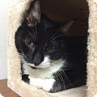Adopt A Pet :: Firth - Chicago Heights, IL