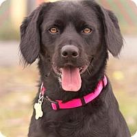 Adopt A Pet :: THEO - Pt. Richmond, CA
