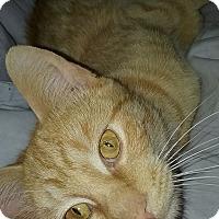 Adopt A Pet :: Utah - Evans, WV