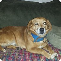 Adopt A Pet :: Sick'em - Iroquois, IL