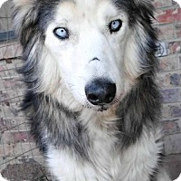Adopt A Pet :: **NANOOK - Peralta, NM