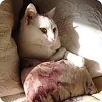 Adopt A Pet :: Crystal - Orange, CA