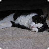 Adopt A Pet :: Roxanne - Waxhaw, NC