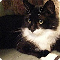 Adopt A Pet :: Julie - Newburgh, NY