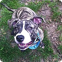 Adopt A Pet :: Raimi - Indianapolis, IN