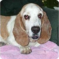 Adopt A Pet :: Kohl - Phoenix, AZ