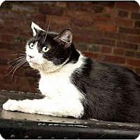 Adopt A Pet :: Oreo - Owensboro, KY