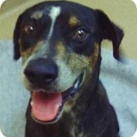 Adopt A Pet :: Forest - Palm City, FL