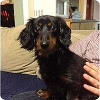 Adopt A Pet :: Coco - Killingworth, CT