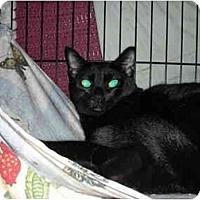 Adopt A Pet :: Kiera - Fort Lauderdale, FL