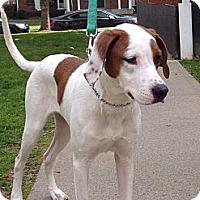 Adopt A Pet :: Carmen - Bardonia, NY