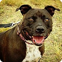 Adopt A Pet :: Bella* (Dolce) - Cheyenne, WY