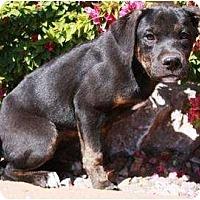 Adopt A Pet :: Loca - Gilbert, AZ