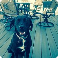 Adopt A Pet :: Moly - Marlton, NJ