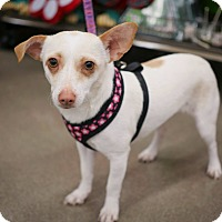 Adopt A Pet :: Hope - Las Vegas, NV