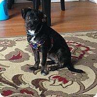 Adopt A Pet :: Audrey - Chicago, IL