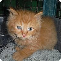 Adopt A Pet :: Beth's Litter 3 - Richfield, OH