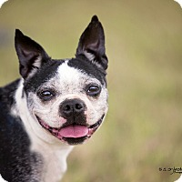 Adopt A Pet :: MARCUS - Weatherford, TX