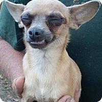 Adopt A Pet :: Dempsey - Gainesville, FL