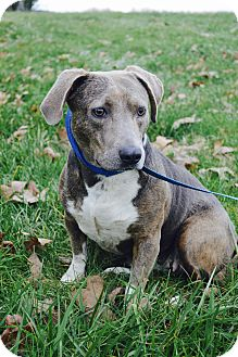 Small Dog Adoption Tennessee