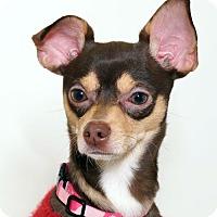Adopt A Pet :: Carole - Sudbury, MA