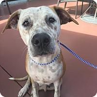 Adopt A Pet :: Skye - Homestead, FL