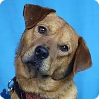 Adopt A Pet :: Dave - Minneapolis, MN