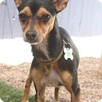 Adopt A Pet :: Houston - Phoenix, AZ