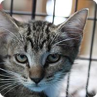 Adopt A Pet :: Peggy Sue - Sarasota, FL
