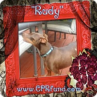 Adopt A Pet :: Rudy - Lowell, IN