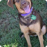 Adopt A Pet :: Onna - Beaumont, TX