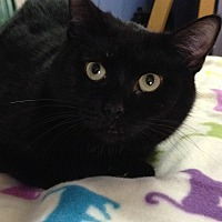 Adopt A Pet :: Yvette - Spring Valley, NY