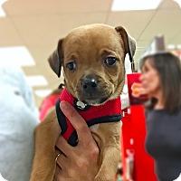Adopt A Pet :: Sally! - New York, NY