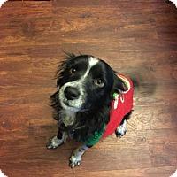 Adopt A Pet :: Doogie - Pittsburgh, PA