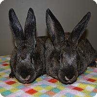Adopt A Pet :: Tina & Louise - Michigan City, IN