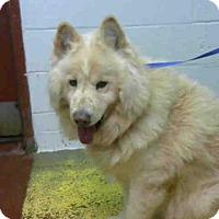 Adopt A Pet :: CISCO - Atlanta, GA