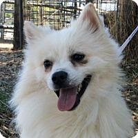 Adopt A Pet :: Glacier - Jamestown, CA