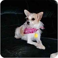 Adopt A Pet :: Chloe - Mooy, AL