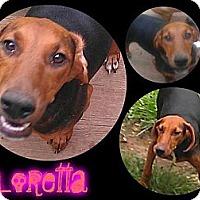 Adopt A Pet :: Loretta - Alamosa, CO